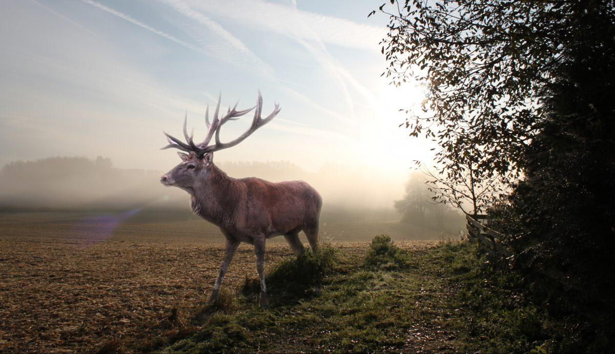 Wildtierstiftung